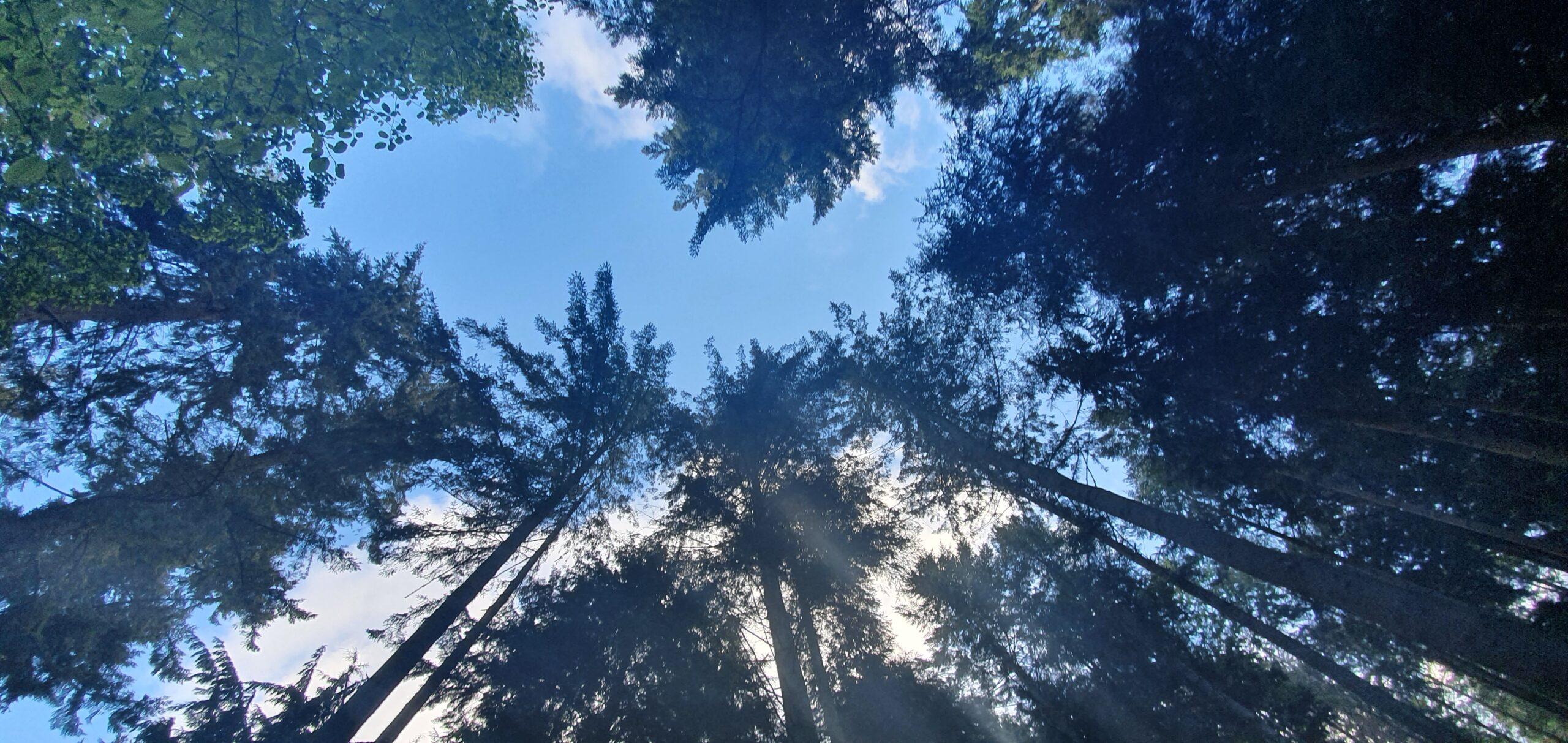 Dunster Tall Tree's Trail